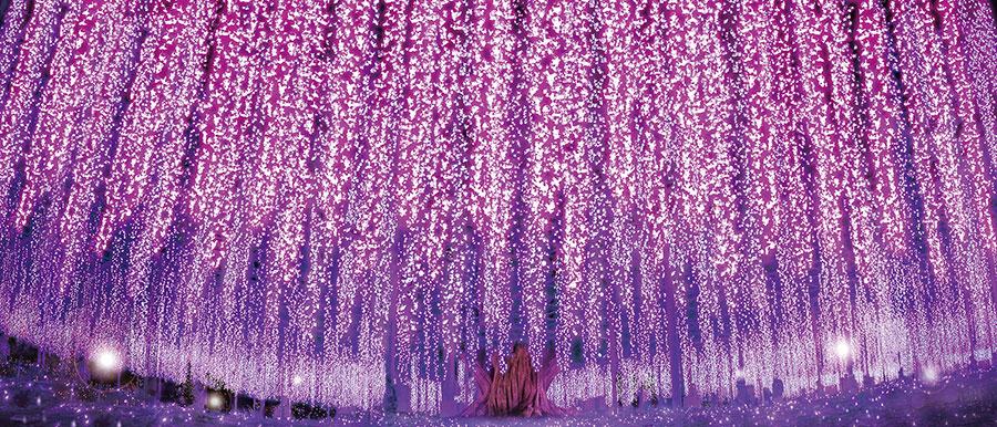 あしかがフラワーパーク 花と光の楽園